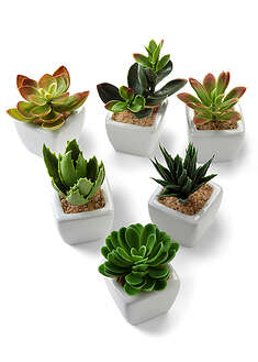 Plante suculente artificiale (set 6 buc.)-bpc living bonprix collection