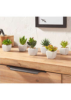 Plante suculente artificiale (set 6 buc.) bpc living bonprix collection 8